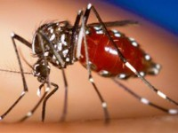 chikungunya-for-Web2