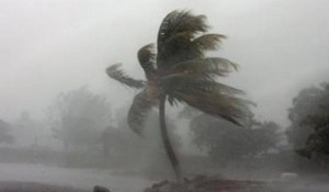 Caribbean_hurricane_palm_tree_400x235_309107383